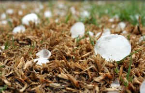 golf ball sized hail melting in the grass after recent hail storm