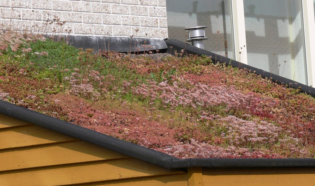 Green Roofing Solutions In Frisco, Tx